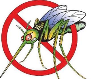 Κουνούπια: οι πιο ενοχλητικοί επισκέπτες