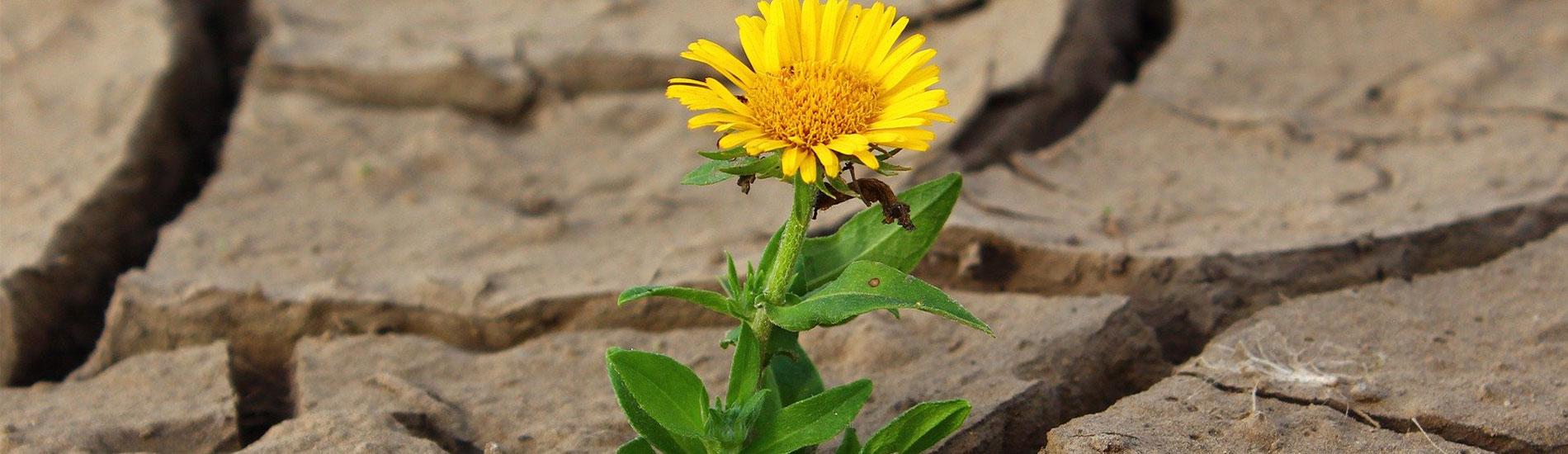 Πώς να προστατευθώ από την ξηροδερμία;