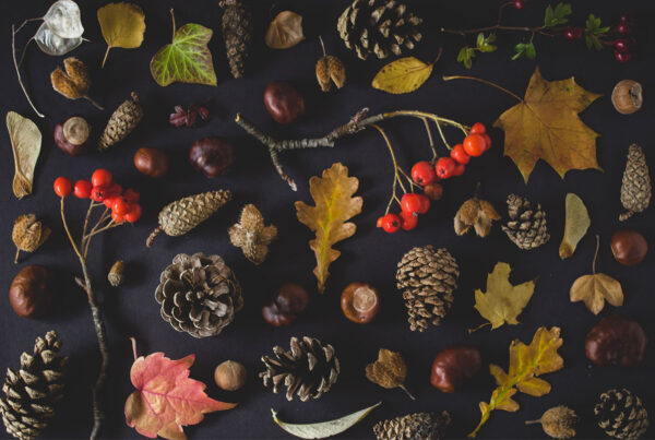 φρούτα, λαχανικά, φθινόπωρο, βιταμίνες, ανοσοποιητικό, αντιοξειδωτικά