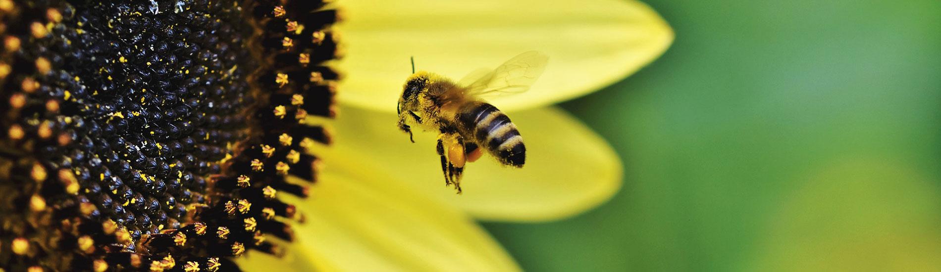 Είναι αλήθεια ότι το μέλι εξασφαλίζει καλό ύπνο;