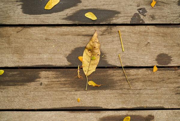 φθινόπωρο, μελαγχολία, Εποχική Συναισθηματική Διαταραχή, ήλιος, σεροτονίνη, άγχος