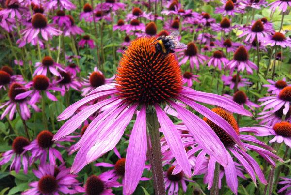 βότανα, χειμώνας, εχινάκεια, βαλεριάνα, ευκάλυπτος, ανοσοποιητικό
