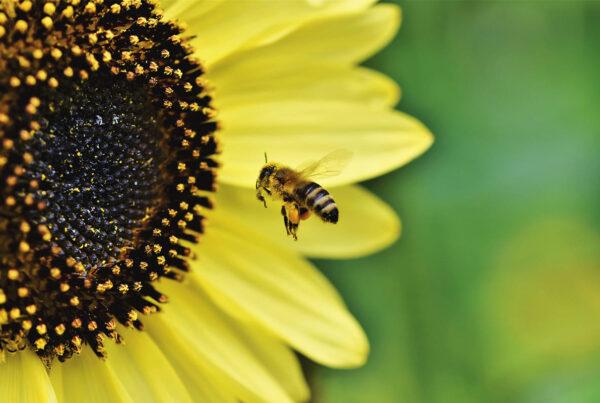 αντιισταμινικά, αλλεργιολόγος, αλλεργία, άνοιξη, γύρη, τεστ