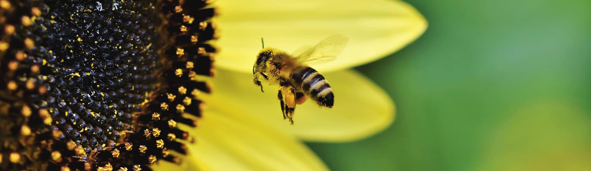 Ποιο αλλεργιογόνο με ταλαιπωρεί;
